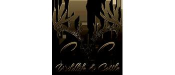C&C Wildlife Cattle
